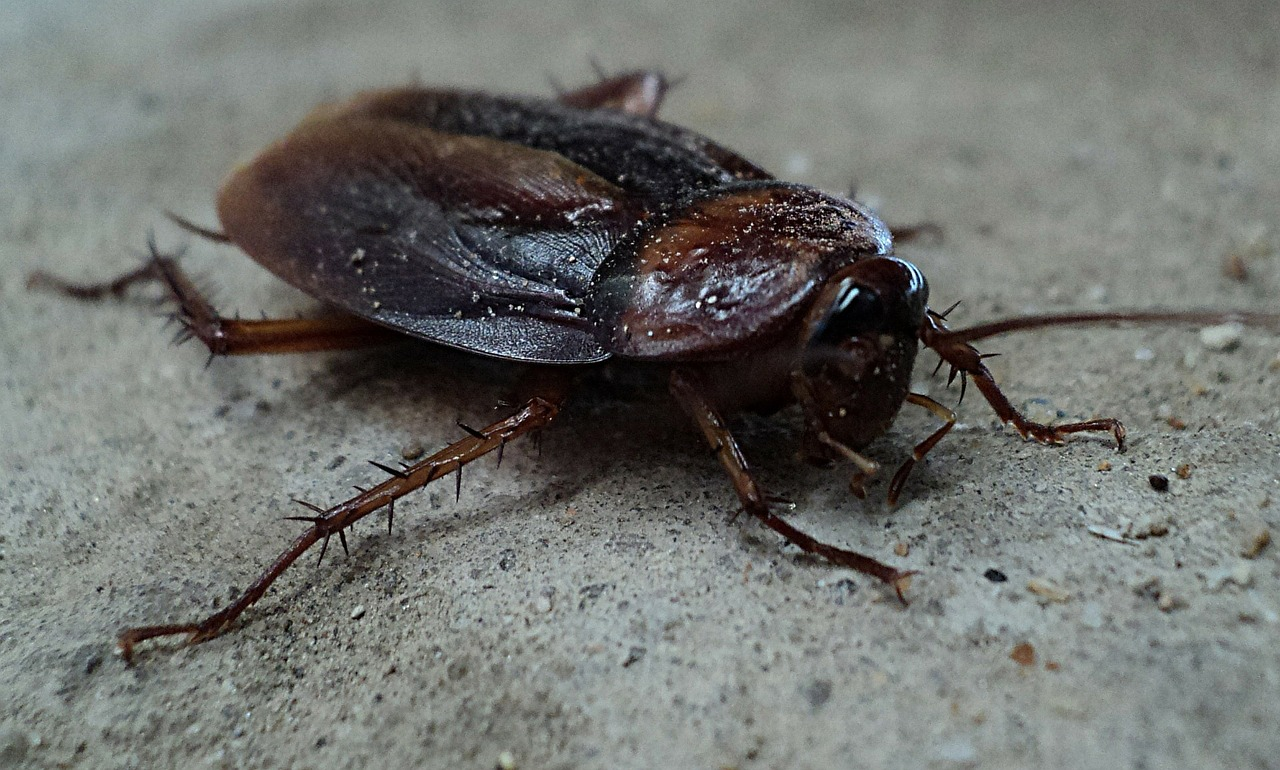 Dit Moet Je Doen Als Je Kakkerlakken In De Badkamer Hebt Groenrijkhuis Nl